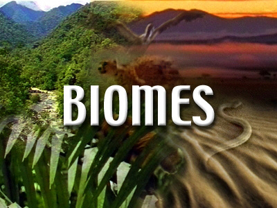 year 5 biome research journal entries