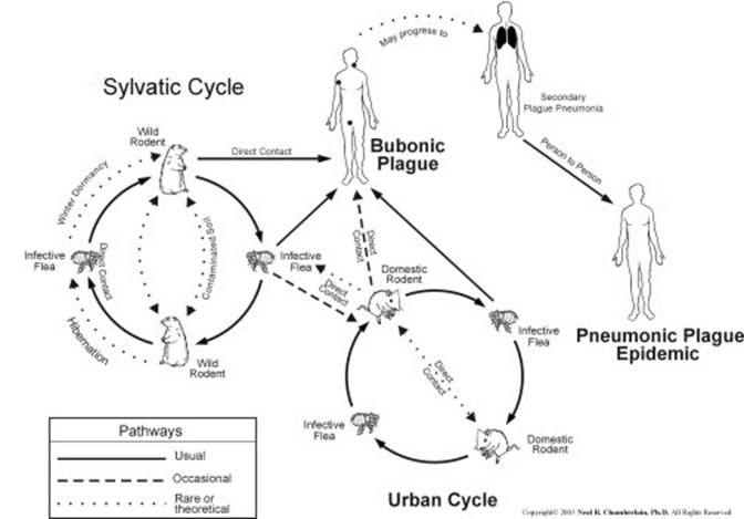 an overview of the plague caused by the yersinia pestis We conclude that the y pestis lineages that caused the plague of yersinia pestis and the plague simply purchase your lancet choice pass from the summary or.